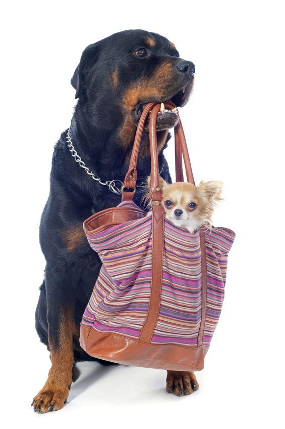transporte de mascotas por avion