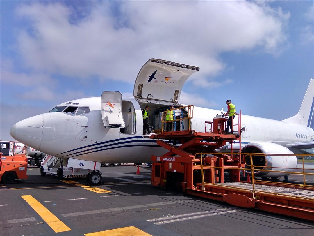 Transporte especial por avion caballos de carreras