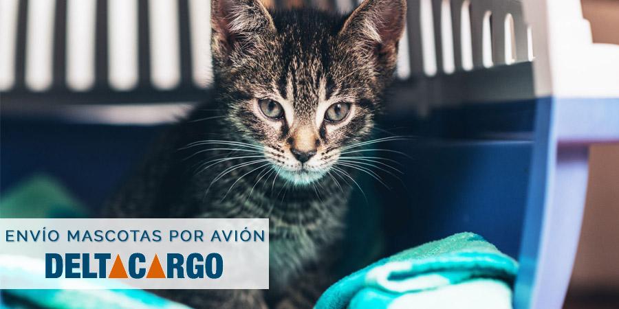 coste-envio-transporte-mascotas-por-avion