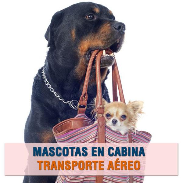 transporte de mascotas en cabina del avion